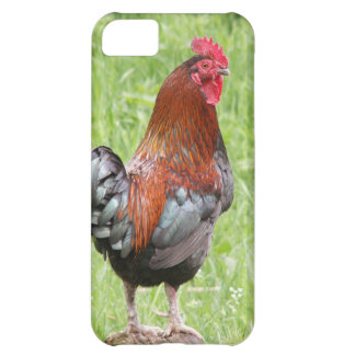 South Carolina Gamecocks Cell Phone Cases Covers iPhone 5C Cover