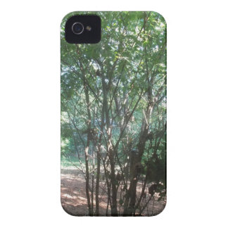 South Carolina Morning Case-Mate iPhone 4 Cases