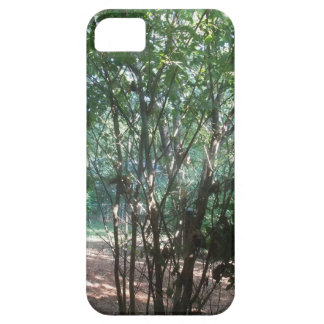 South Carolina Morning iPhone 5 Cases