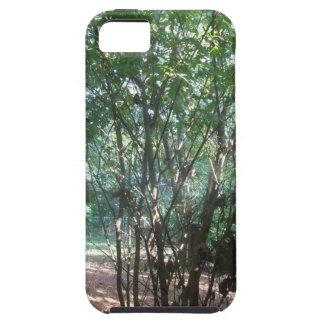 South Carolina Morning iPhone 5 Cover