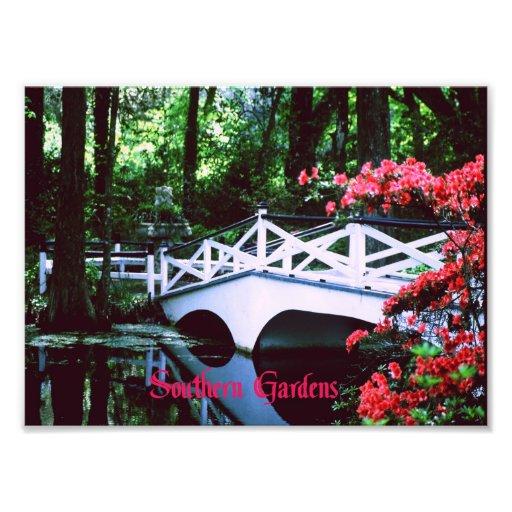 South Carolina Photo Print