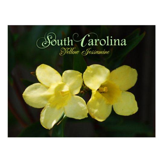 South Carolina State Flower Yellow Jessamine Postcard Zazzle