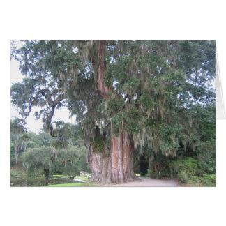 South Carolina Tree Card