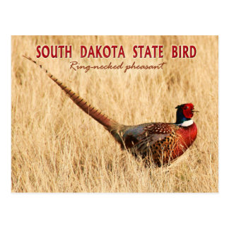 South Dakota State Bird: Ring-necked Pheasant Postcard