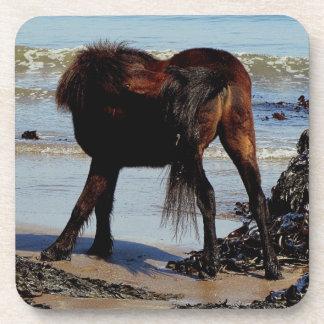 South Devon Beach Dartmoor Pony Biteing Tail Beverage Coaster