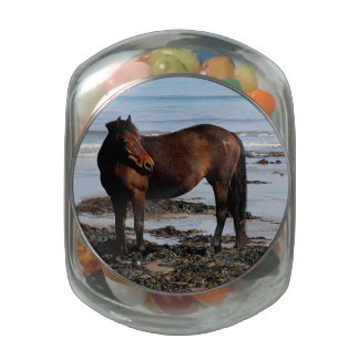South Devon Beach Dartmoor Pony Looking Glass Jars