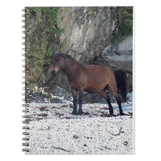 South Devon Beach Dartmoor Pony Near Rocks Notebook
