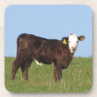 South Devon Calf Standing On Hill Top Looking Drink Coasters