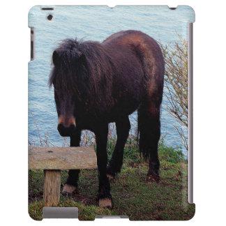 South Devon Coast Dartmoor Pony At Bench