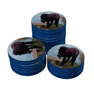 South Devon Coast Dartmoor Pony At Bench Poker Chips