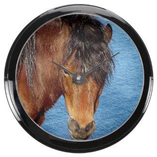 South Devon Coast Dartmoor Pony Looking . 1 Aquavista Clocks