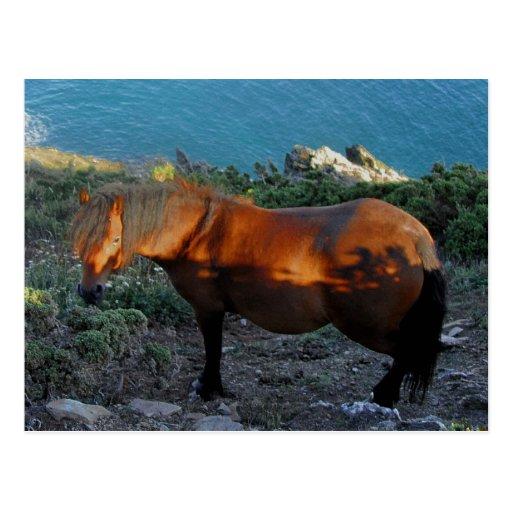 South Devon Coast Dartmoor Pony Summer Evening Postcard