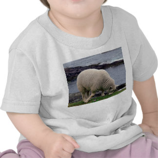 South Devon Coast Lamb Grazing On Cliff Edge Tshirts