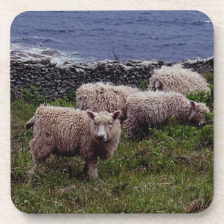 South Devon Coast Long Wool Sheep & Lambs Grazeing Drink Coaster