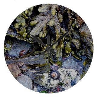 South Devon Coast Rockpool Sea Plantlife .3. Large Clock