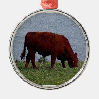 South Devon cow on remote coastline Round Metal Christmas Ornament