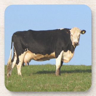South Devon Cow Standng Hill Top Looking Beverage Coasters