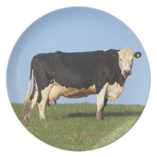 South Devon Cow Standng On Hil Top Looking Dinner Plate