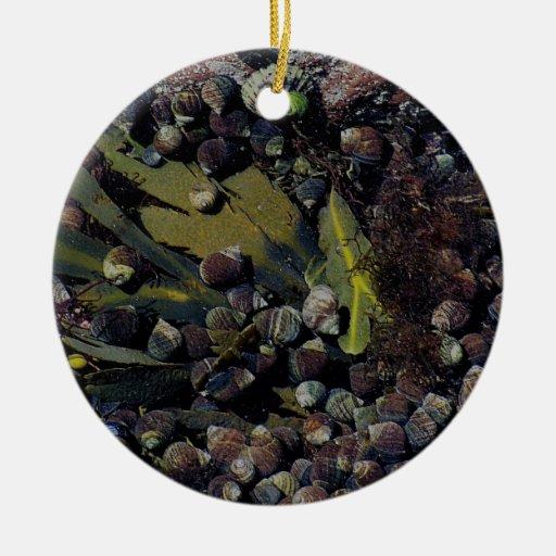 South Devon crowded sea life in rockpool Ceramic Ornament