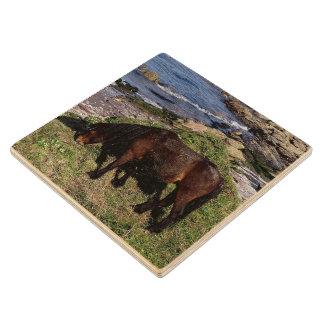 South Devon Dartmoor Pony Grazing Near Beach Wooden Coaster