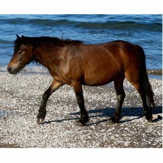 South Devon Dartmoor Pony Walking On Beach Statuette