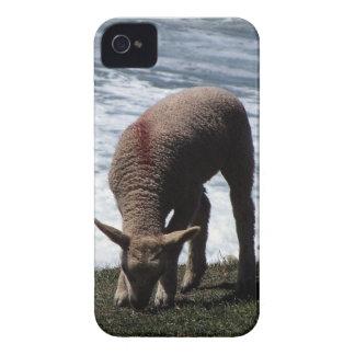 South Devon Lamb Grazeing On Wild Coastline. iPhone 4 Cover