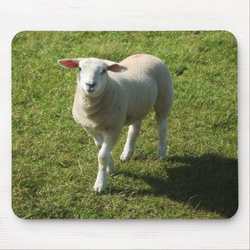 South Devon Lamb Looking With Interest Mouse Pad