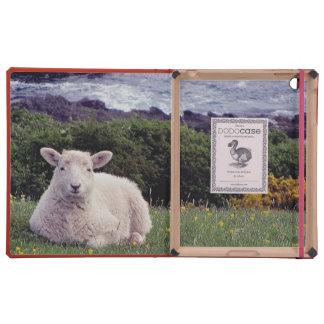 South Devon Lamb Resting On Remote Coastline iPad Case