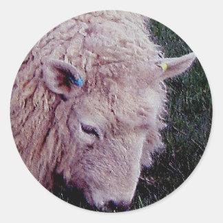 South Devon Long Wool Grazeing Classic Round Sticker