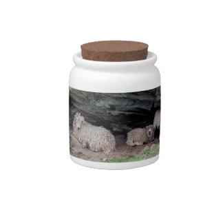 South Devon Long Wool Sheep Family Sheltering Candy Jar