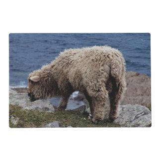South Devon Long Wool Sheep Lamb Grazing On Coast Placemat