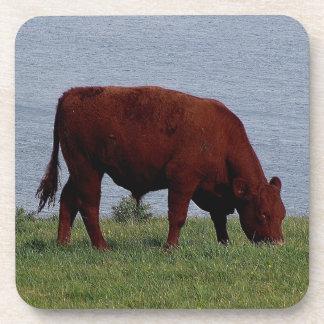 South Devon Ruby Cow Grazeing On Coastline Coaster