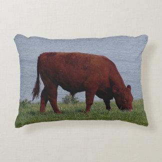South Devon Ruby Cow Grazing On Coastline Accent Pillow
