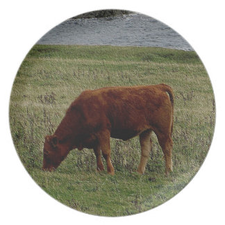 South Devon  Ruby Red Cow Grazeing On Remote Coast Melamine Plate