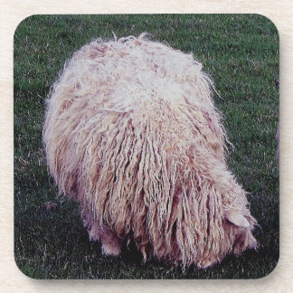 South Devon Scruffy Long Wool Sheep Grazeing Coaster