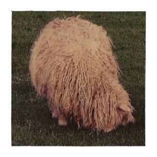 South Devon Scruffy Long Wool Sheep Grazing Beverage Coasters