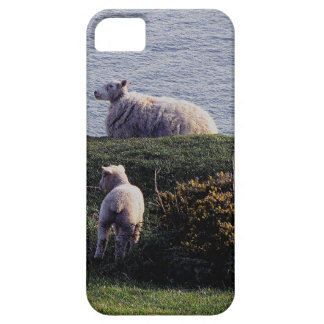 South Devon Sheep And Lamb On Remote Coastline iPhone SE/5/5s Case