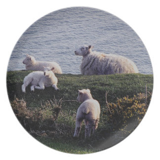 South Devon Sheep And Lambs On Remote Coastline Dinner Plate