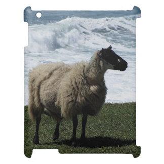 South Devon Sheep On Wild Coastline iPad Cover