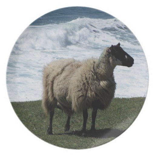 South Devon Sheep On Wild Coastline Party Plate