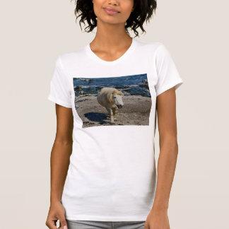 South Devon Shetland Pony Walking On Remote Beach Tshirts