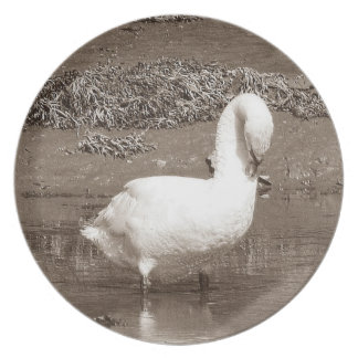 South Devon Swan Standing Estury Low Tide Dinner Plate