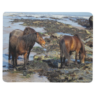 South Devon Three Dartmoor Ponies Enjoying Beach Journal