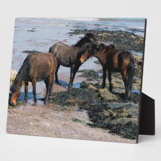 South Devon Three Dartmoor Ponies On Beach Plaque