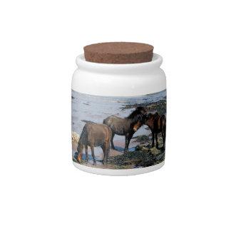 South Devon Three Dartmoor Ponies Playing On Beach Candy Jars