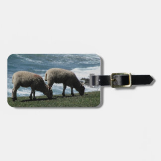 South Devon Two Lambs Grazeing On Wild Coastline Tag For Bags