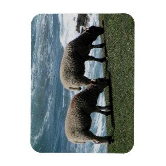 South Devon Two Lambs Grazeing On Wild Coastline Rectangular Photo Magnet