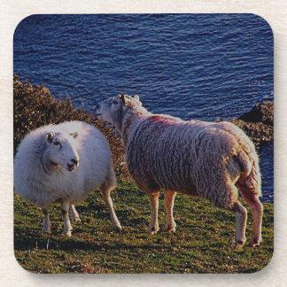 South Devon Two Sheep Grazeing On Remote Coastline Drink Coaster