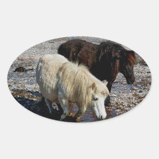 South Devon Two Shetland Ponies On Remote Beach Oval Sticker