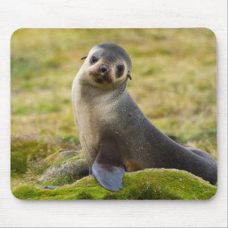 South Georgia. Antarctic fur seal 2 Mouse Pad